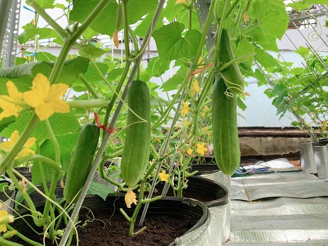 Khu vườn xanh tươi trên mái nhà và bí quyết đáng học hỏi của mẹ 3 con ở Sài Gòn - Ảnh 13.