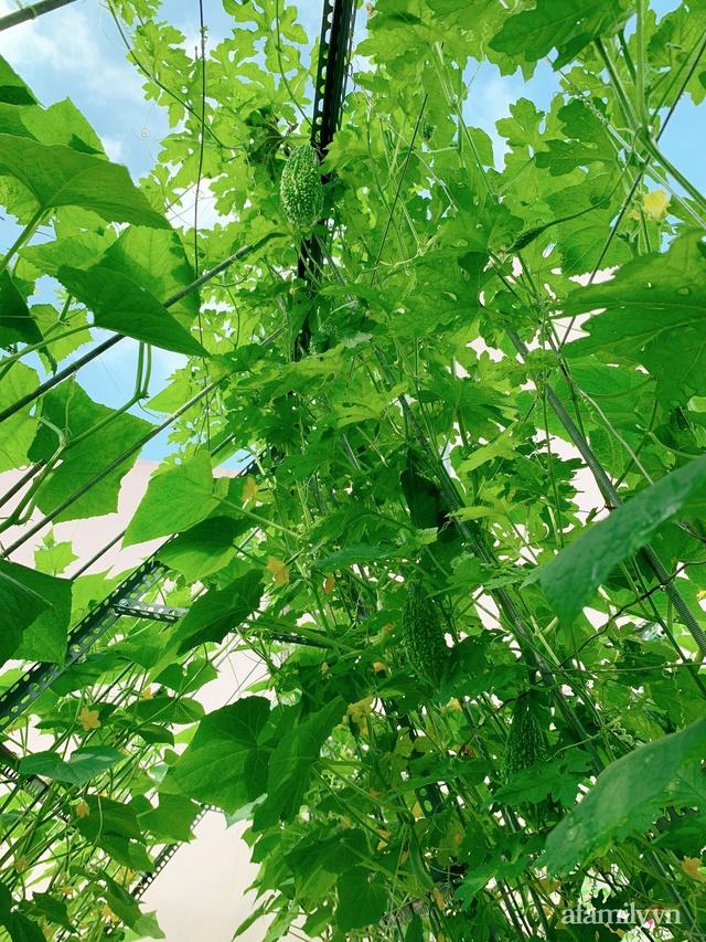 Khu vườn xanh tươi trên mái nhà và bí quyết đáng học hỏi của mẹ 3 con ở Sài Gòn - Ảnh 16.