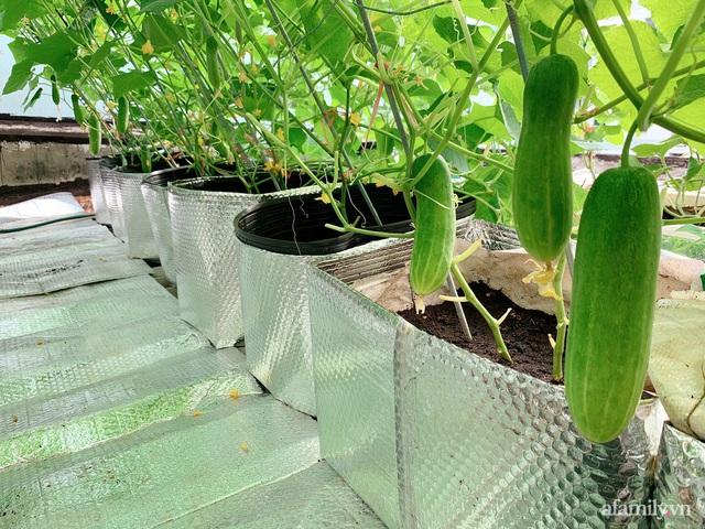 Khu vườn xanh tươi trên mái nhà và bí quyết đáng học hỏi của mẹ 3 con ở Sài Gòn - Ảnh 9.