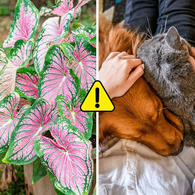 7 loại cây cảnh nhìn thì đẹp nhưng lại tiềm ẩn nguy hiểm, muốn trồng trong nhà phải cân nhắc kỹ - Ảnh 1.