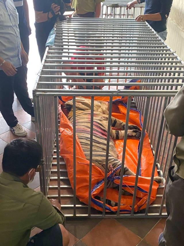 Khởi tố, bắt giam ông chủ nuôi 14 con hổ Đông Dương trái phép trong tầng hầm của gia đình - Ảnh 3.