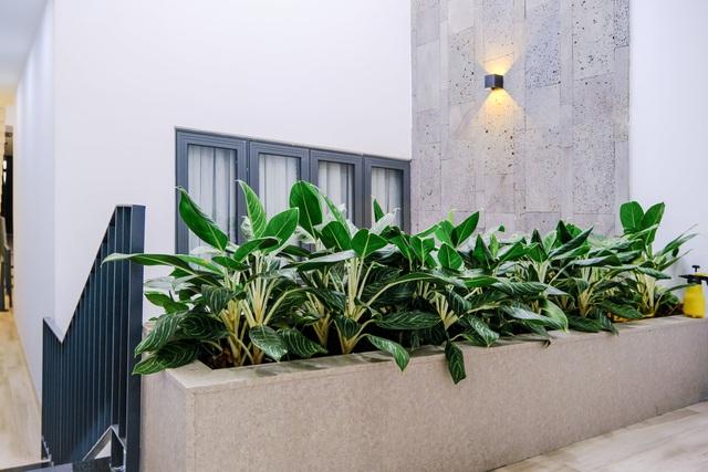 Ngôi nhà phố được thiết kế hiện đại, tinh tế: Không gian sống nhiều cây xanh, có cả bể cá Koi hợp phong thủy, đem lại may mắn cho gia chủ - Ảnh 20.