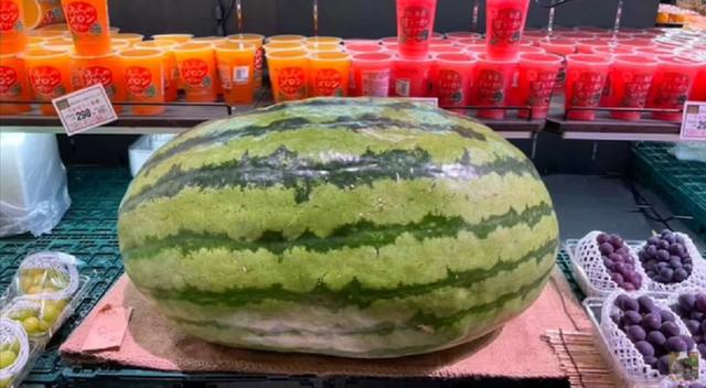 Rẻ như cho loại dưa hấu khổng lồ nặng tới 56kg, hương vị mới gây bất ngờ cho khách Việt - Ảnh 1.