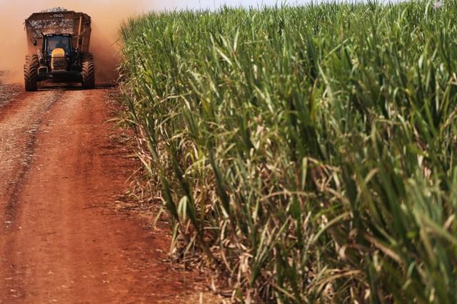 """Mùa mía """"đắng"""" ở Brazil ảnh hưởng tới người tiêu dùng đường trên toàn cầu - Ảnh 2."""
