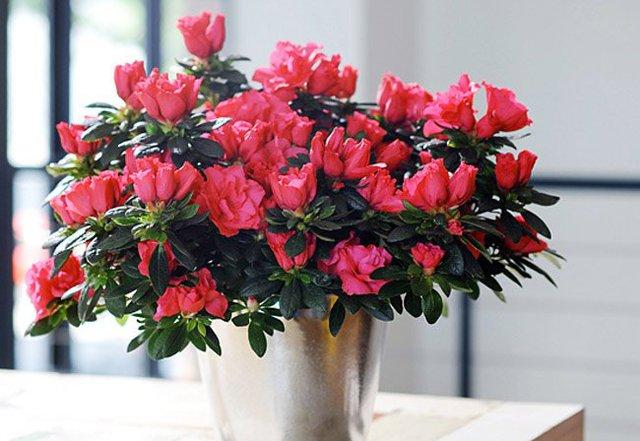 12 loại hoa may mắn được giới nhà giàu ưa chuộng: Vừa làm đẹp ngôi nhà vừa thu hút tài lộc, giá cả lại không quá đắt đỏ thì tội gì không trồng ngay - Ảnh 4.