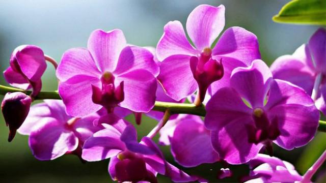 12 loại hoa may mắn được giới nhà giàu ưa chuộng: Vừa làm đẹp ngôi nhà vừa thu hút tài lộc, giá cả lại không quá đắt đỏ thì tội gì không trồng ngay - Ảnh 1.