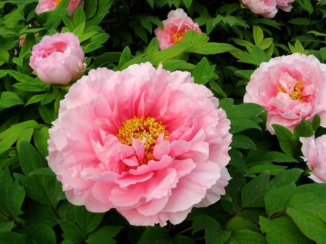 12 loại hoa may mắn được giới nhà giàu ưa chuộng: Vừa làm đẹp ngôi nhà vừa thu hút tài lộc, giá cả lại không quá đắt đỏ thì tội gì không trồng ngay - Ảnh 2.
