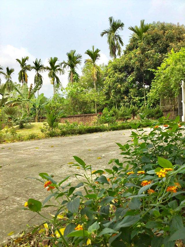 Nhà vườn 5.000m2 tuyệt đẹp ở ven đô Hà Nội: Không gian sống đơn giản, gần gũi với thiên nhiên nhưng mất ít công chăm sóc, để nhà thực sự là nơi nghỉ ngơi, thư giãn - Ảnh 5.