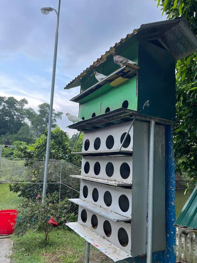 Nhà vườn 5.000m2 tuyệt đẹp ở ven đô Hà Nội: Không gian sống đơn giản, gần gũi với thiên nhiên nhưng mất ít công chăm sóc, để nhà thực sự là nơi nghỉ ngơi, thư giãn - Ảnh 13.