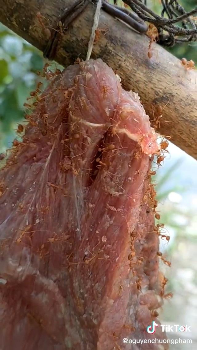 Ở Việt Nam có món đặc sản rất dị: Mang miếng thịt bò treo lên cây, đợi kiến bu đầy mới mang đi ăn - Ảnh 2.