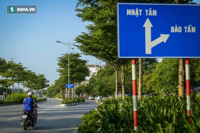 Cận cảnh hàng cây bàng lá nhỏ, chà là trong vụ Tổng Giám đốc công ty cây xanh Hà Nội bị bắt - Ảnh 11.