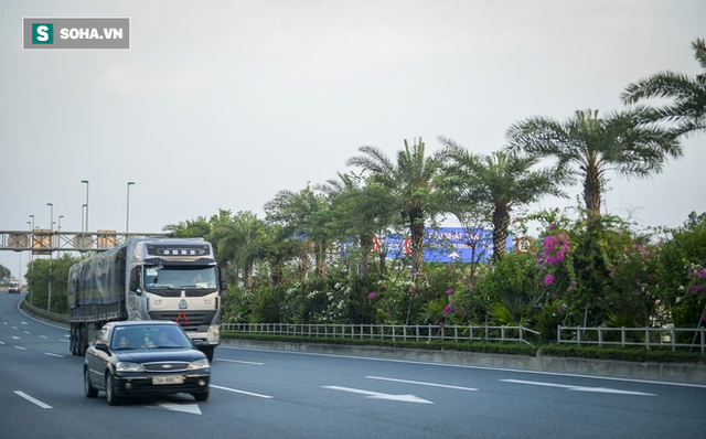 Cận cảnh hàng cây bàng lá nhỏ, chà là trong vụ Tổng Giám đốc công ty cây xanh Hà Nội bị bắt - Ảnh 13.