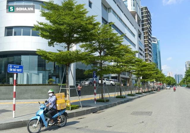 Cận cảnh hàng cây bàng lá nhỏ, chà là trong vụ Tổng Giám đốc công ty cây xanh Hà Nội bị bắt - Ảnh 5.