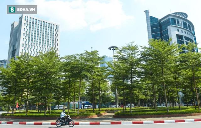 Cận cảnh hàng cây bàng lá nhỏ, chà là trong vụ Tổng Giám đốc công ty cây xanh Hà Nội bị bắt - Ảnh 6.