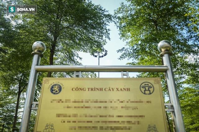 Cận cảnh hàng cây bàng lá nhỏ, chà là trong vụ Tổng Giám đốc công ty cây xanh Hà Nội bị bắt - Ảnh 9.