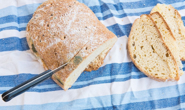 Túi bánh mì vừa mua về đã có một lát bị nấm mốc, bạn sẽ làm gì? - Ảnh 2.