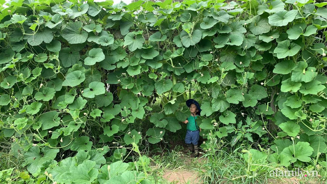 Khu vườn của mẹ Việt sai trĩu rau củ với kích thước khủng - Ảnh 1.