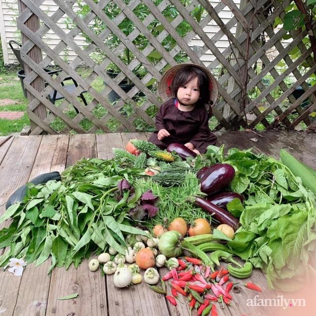 Khu vườn của mẹ Việt sai trĩu rau củ với kích thước khủng - Ảnh 2.