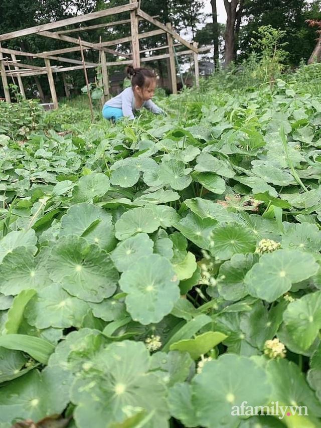 Khu vườn của mẹ Việt sai trĩu rau củ với kích thước khủng - Ảnh 21.