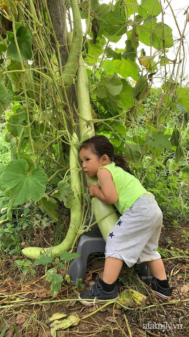 Khu vườn của mẹ Việt sai trĩu rau củ với kích thước khủng - Ảnh 7.