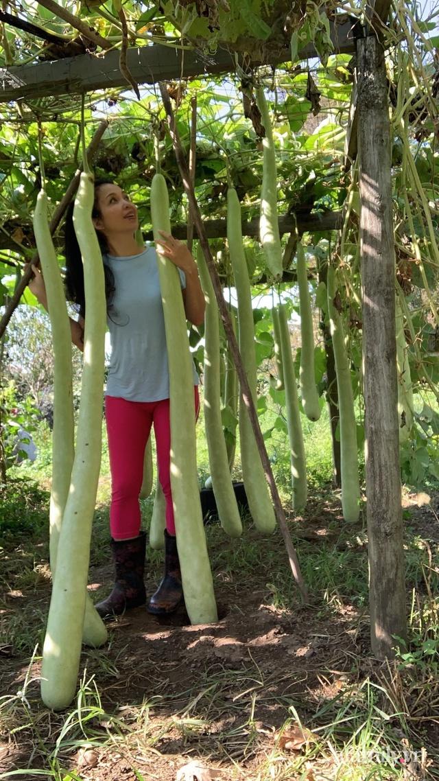 Khu vườn của mẹ Việt sai trĩu rau củ với kích thước khủng - Ảnh 8.
