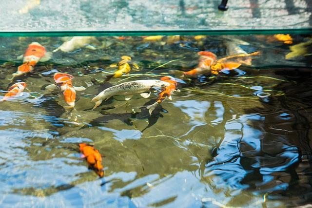 Đại gia Hà Nội xây biệt thự 9 tầng giữa lòng thành phố, chi 5 tỷ làm hồ cá, 10 tỷ mua chim quý - Ảnh 3.