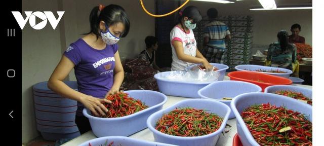 Nhiều mặt hàng nông sản lên giá, người dân phấn khởi - Ảnh 2.