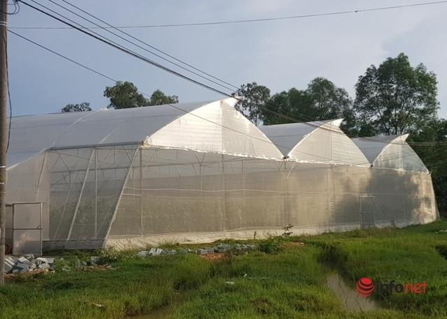 Thầy giáo khởi nghiệp trồng dưa lưới, lãi hơn trăm triệu đồng/năm - Ảnh 1.