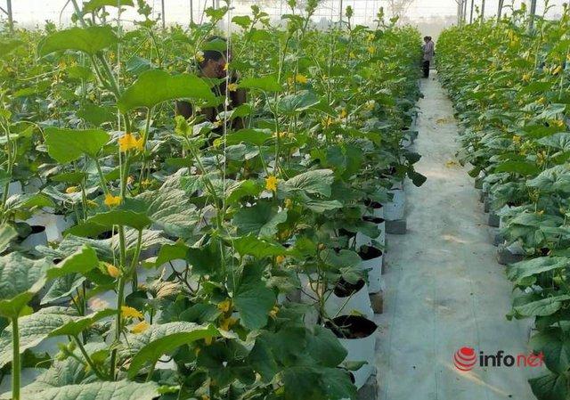 Thầy giáo khởi nghiệp trồng dưa lưới, lãi hơn trăm triệu đồng/năm - Ảnh 2.