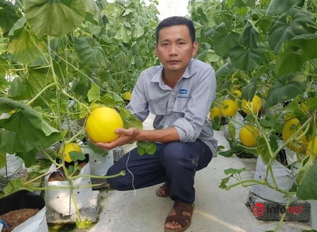 Thầy giáo khởi nghiệp trồng dưa lưới, lãi hơn trăm triệu đồng/năm - Ảnh 3.