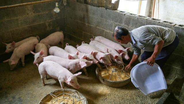 Từng được 'quý như vàng', giá thịt lợn lao dốc khiến doanh nghiệp top đầu Trung Quốc ngập trong nợ - Ảnh 1.