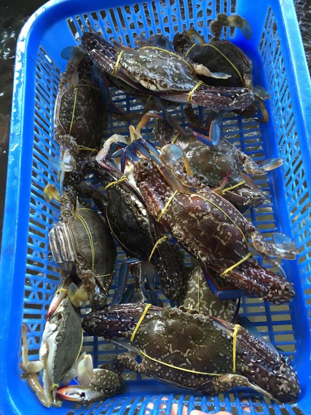 Dịch bệnh vắng khách du lịch, giá nhiều loại hải sản Phú Quốc giảm sâu - Ảnh 3.