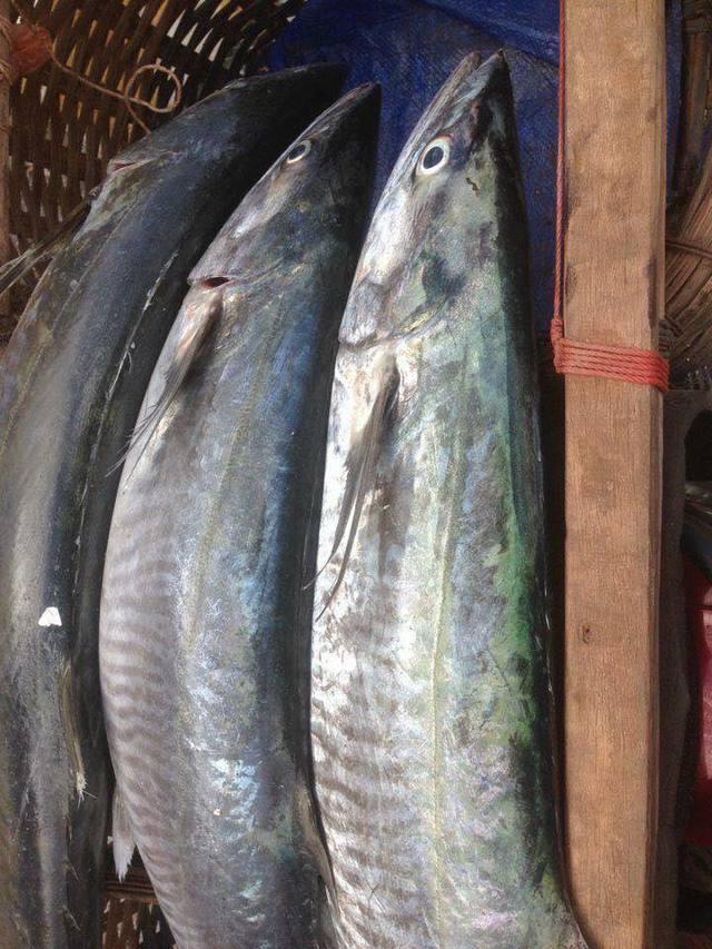 Dịch bệnh vắng khách du lịch, giá nhiều loại hải sản Phú Quốc giảm sâu - Ảnh 6.