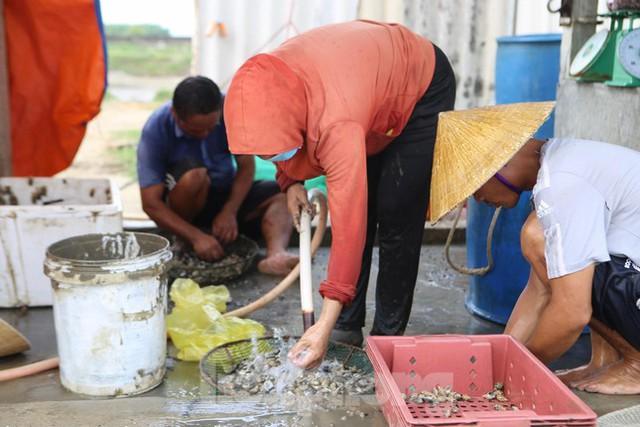 Nông dân Hà Tĩnh lao đao vì ốc hương rớt giá thê thảm - Ảnh 15.