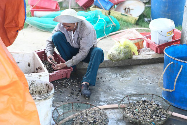 Nông dân Hà Tĩnh lao đao vì ốc hương rớt giá thê thảm - Ảnh 4.