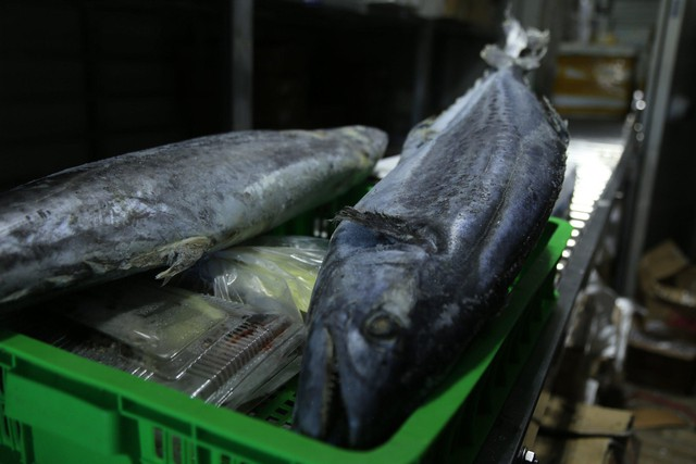 Hàng ngàn tấn hải sản nằm kho lạnh vì dịch, chủ hàng lo phá sản vì phải bù lỗ tiền điện - Ảnh 7.