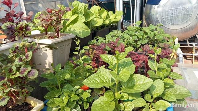 Khoảng sân thượng chỉ 15m² nhưng đủ các loại rau xanh tốt tươi không lo thiếu thực phẩm mùa dịch ở Hà Nội - Ảnh 11.