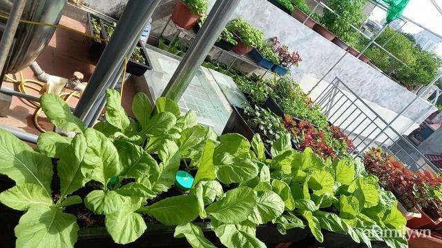 Khoảng sân thượng chỉ 15m² nhưng đủ các loại rau xanh tốt tươi không lo thiếu thực phẩm mùa dịch ở Hà Nội - Ảnh 13.