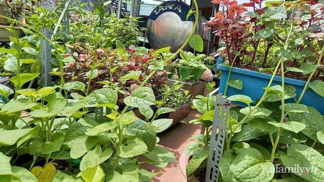 Khoảng sân thượng chỉ 15m² nhưng đủ các loại rau xanh tốt tươi không lo thiếu thực phẩm mùa dịch ở Hà Nội - Ảnh 16.