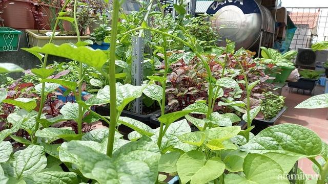 Khoảng sân thượng chỉ 15m² nhưng đủ các loại rau xanh tốt tươi không lo thiếu thực phẩm mùa dịch ở Hà Nội - Ảnh 19.