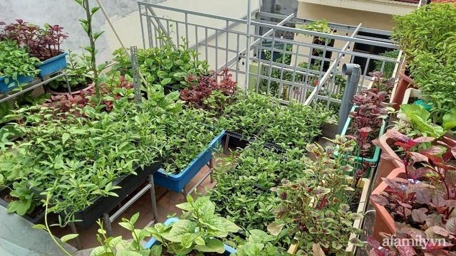 Khoảng sân thượng chỉ 15m² nhưng đủ các loại rau xanh tốt tươi không lo thiếu thực phẩm mùa dịch ở Hà Nội - Ảnh 20.