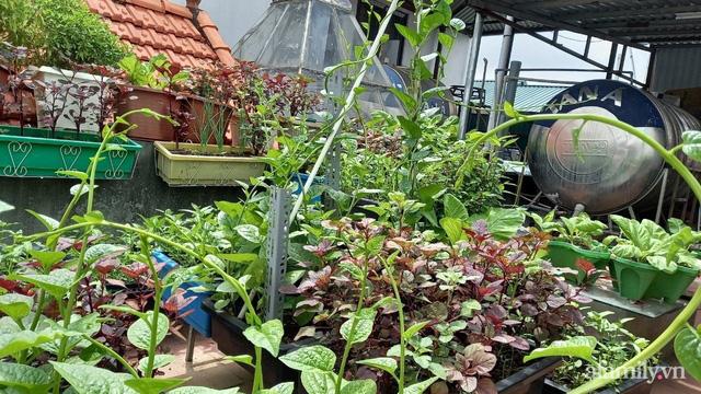 Khoảng sân thượng chỉ 15m² nhưng đủ các loại rau xanh tốt tươi không lo thiếu thực phẩm mùa dịch ở Hà Nội - Ảnh 3.
