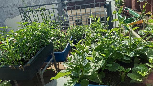Khoảng sân thượng chỉ 15m² nhưng đủ các loại rau xanh tốt tươi không lo thiếu thực phẩm mùa dịch ở Hà Nội - Ảnh 21.