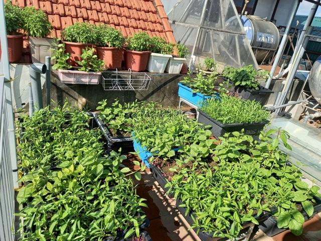 Khoảng sân thượng chỉ 15m² nhưng đủ các loại rau xanh tốt tươi không lo thiếu thực phẩm mùa dịch ở Hà Nội - Ảnh 22.