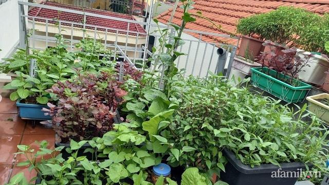 Khoảng sân thượng chỉ 15m² nhưng đủ các loại rau xanh tốt tươi không lo thiếu thực phẩm mùa dịch ở Hà Nội - Ảnh 4.