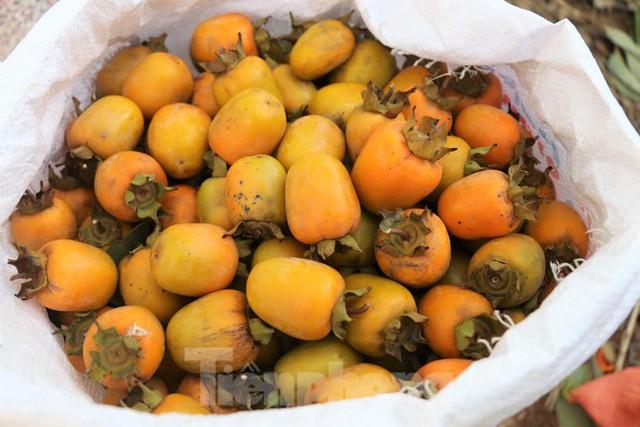 Vựa hồng lớn nhất Nghệ An vào mùa thu hoạch - Ảnh 6.