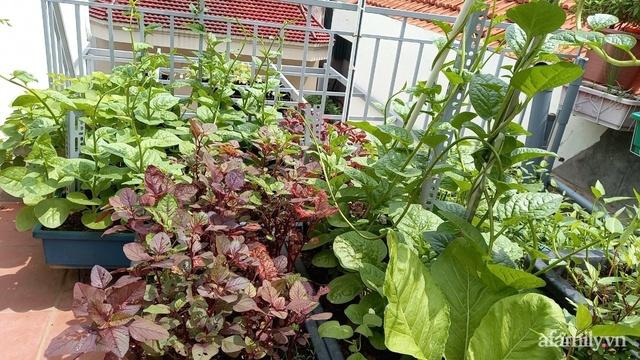 Khoảng sân thượng chỉ 15m² nhưng đủ các loại rau xanh tốt tươi không lo thiếu thực phẩm mùa dịch ở Hà Nội - Ảnh 9.