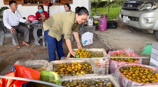 Vựa hồng lớn nhất Nghệ An vào mùa thu hoạch - Ảnh 9.