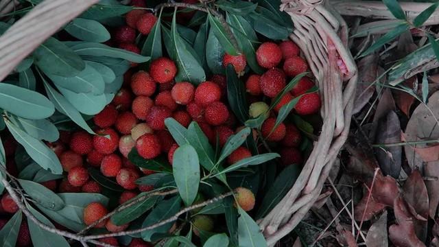 Cô gái trẻ bỏ phố về quê, sống những ngày an yên trong nhà thuê cùng khu vườn đủ loại rau trái - Ảnh 16.