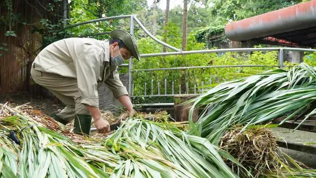 Cận cảnh Thảo Cầm Viên Sài Gòn sau nhiều tháng đóng cửa  - Ảnh 4.